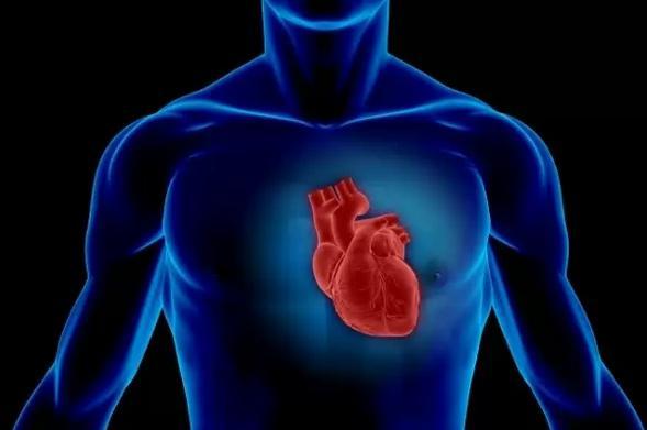 Дополнительная хорда трабекула левого желудочка сердца понятие прогноз